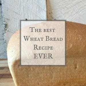 The Easiest Wheat Bread Recipe EVER