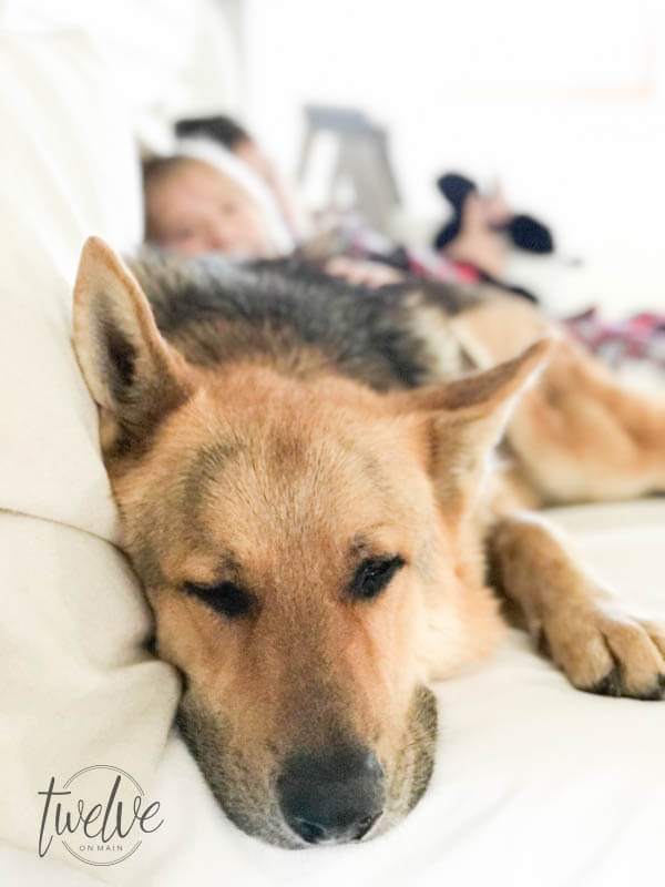 Why I switched my sleep number bed for the new Voila bed! Check out my Voila Mattress review and see for yourself! Even my German Shepherd loves it!