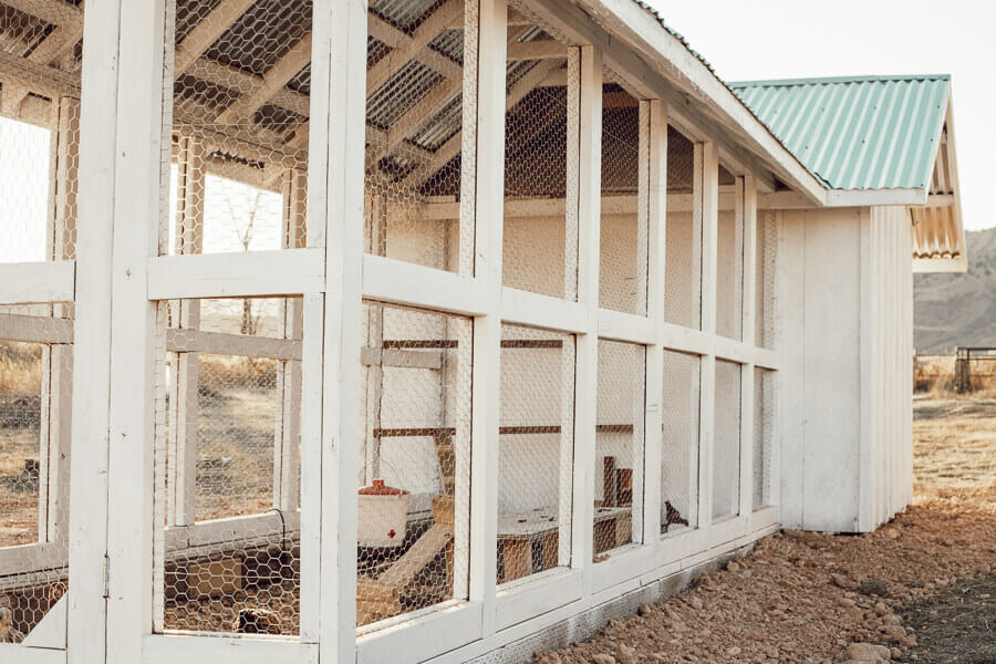 Amazing chicken coop ideas for those looking for something stylish and functional for both your chickens and the humans!