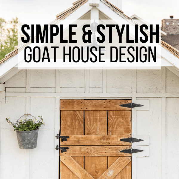 Simple and Stylish Goat House Design