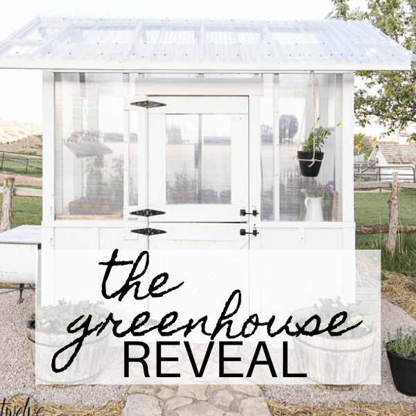 Our DIY Greenhouse Design and Reveal