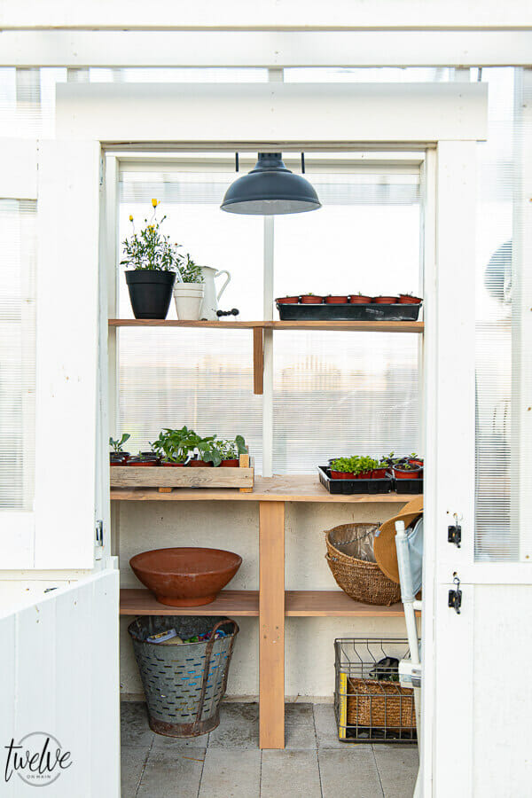 Inside our new greenhouse with gorgeous lights, rustic wood shelves, and even a secret desk for me! I may never leave.