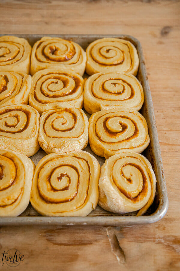 Pumpkin cinnamon rolls with a spicy cinnamon cream cheese frosting. These are the perfect fall treat!